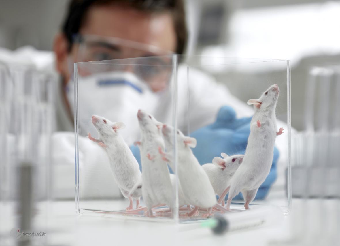 زمان برای انسان ها کندتر از موش ها می گذرد!